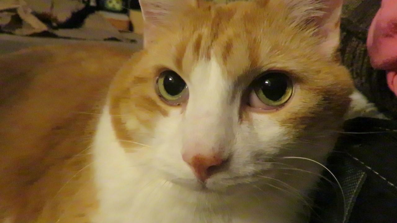 mycatssupercuteface