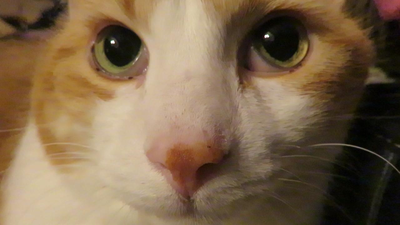 mycatssupercuteface1.jpg